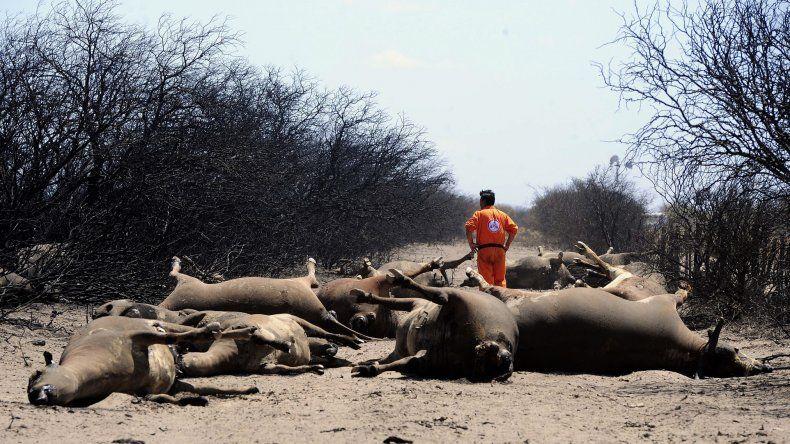 El paisaje es desolador en las zonas afectadas. En los campos