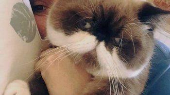 Su gato se perdió en un vuelco y ofrece $30.000 de recompensa
