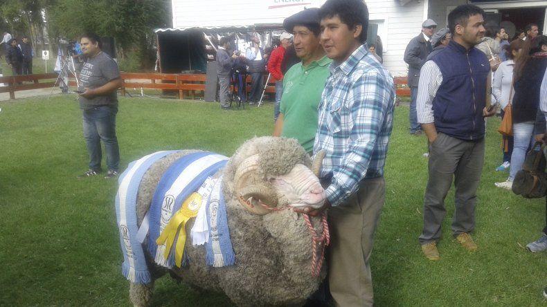 Un nuevo campeón se coronó ayer en la muestra rural de Comodoro Rivadavia.