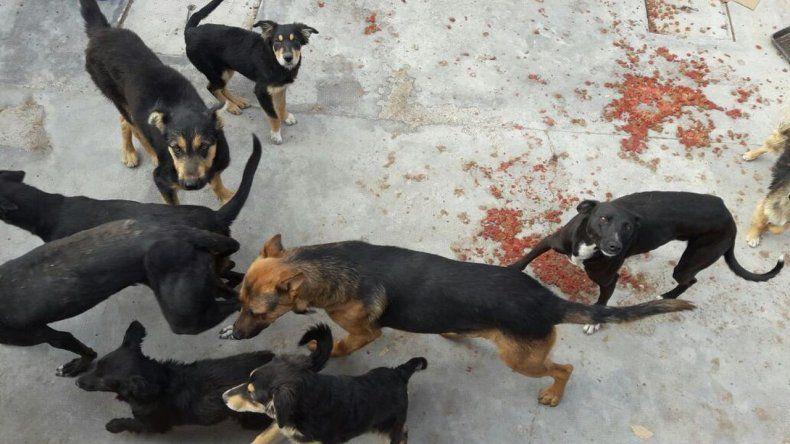 Denuncian matanza de perros: el intendente dio la orden de matarlos