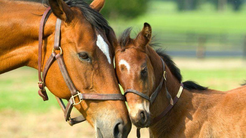 Los cambios climáticos multiplicaron las especies de caballos