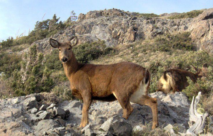 Parque Nacional Los Alerces, hogar del huemul