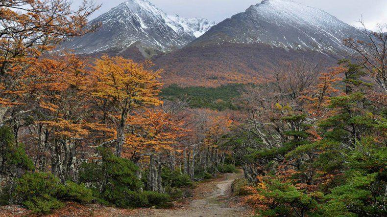 El Parque Nacional Tierra del Fuego en zona de Bahía Lapataia.