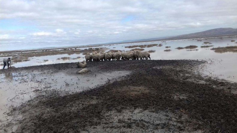 En la estancia El Sacrificio la familia González aún intenta salvar sus ovejas