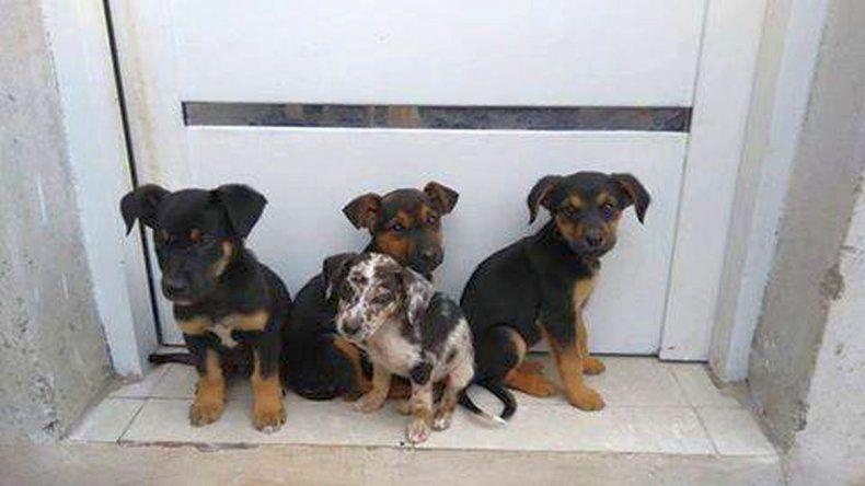 Mascoteros celebran el Día del Animal con una jornada de adopciones