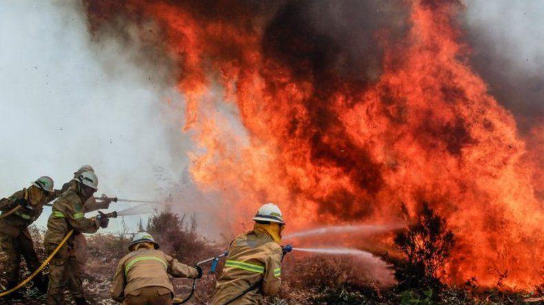 Voraz incendio en Portugal: asciende a 61 la cifra de víctimas fatales