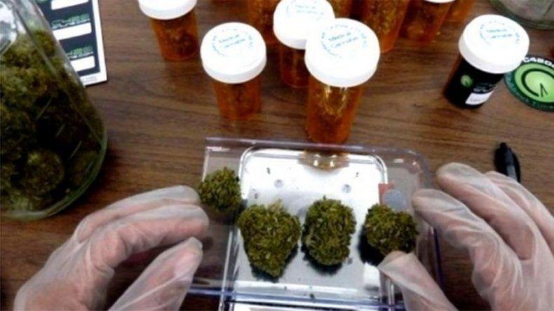 Una provincia argentina cultivará cannabis con fines medicinales