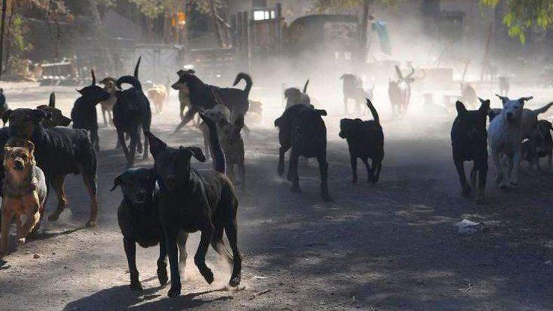Ushuaia en emergencia socio ambiental por los ataques de jaurías
