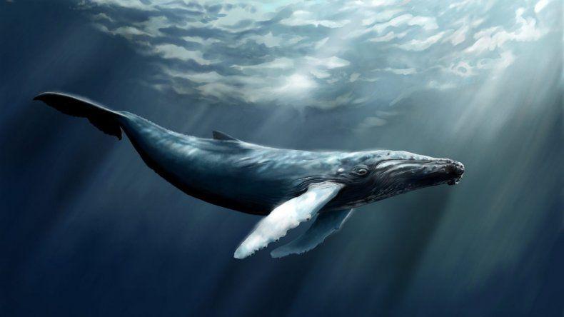 La historia de la ballena más solitaria del mundo