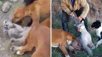 Indignación por salvaje caza de un puma cachorro