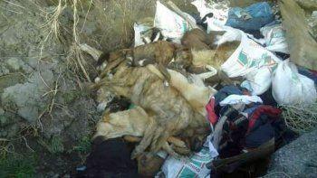 Denuncian matanza indiscriminada de perros en Sarmiento