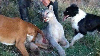 Más de 10 mil personas piden detener el exterminio del puma en Argentina