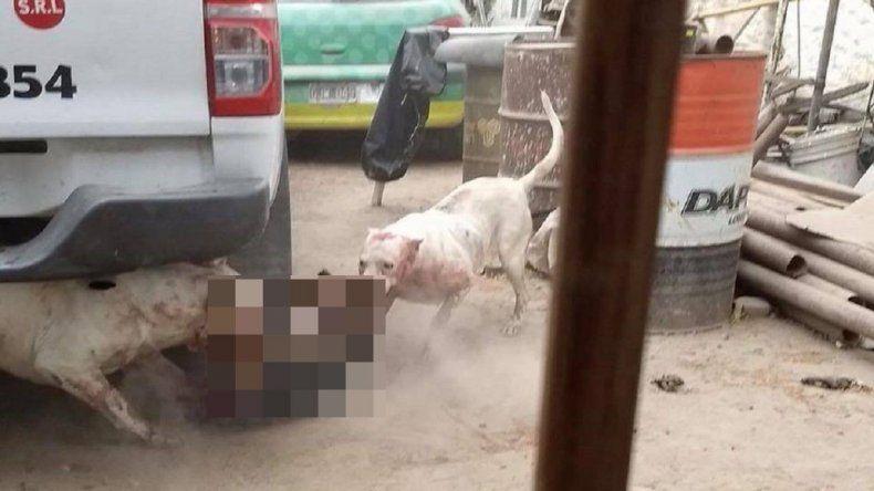 Captura perros callejeros para darle de comer a sus dogos