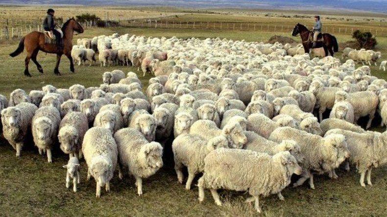130 productos de ovinos y bovinos