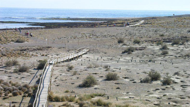 Cabo Dos Bahías lanza la Temporada de Pingüinos mañana