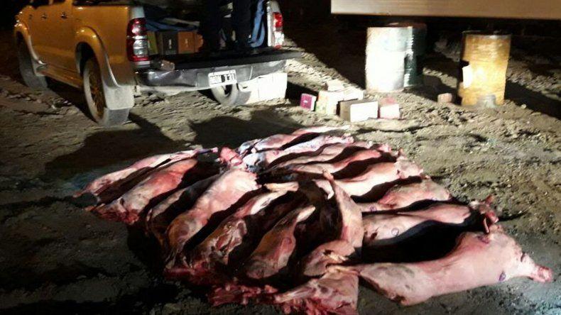 Los ovinos faenados que eran transportados ilegalmente en una camioneta fueron decomisados e introducidos en tambores para ser incinerados.