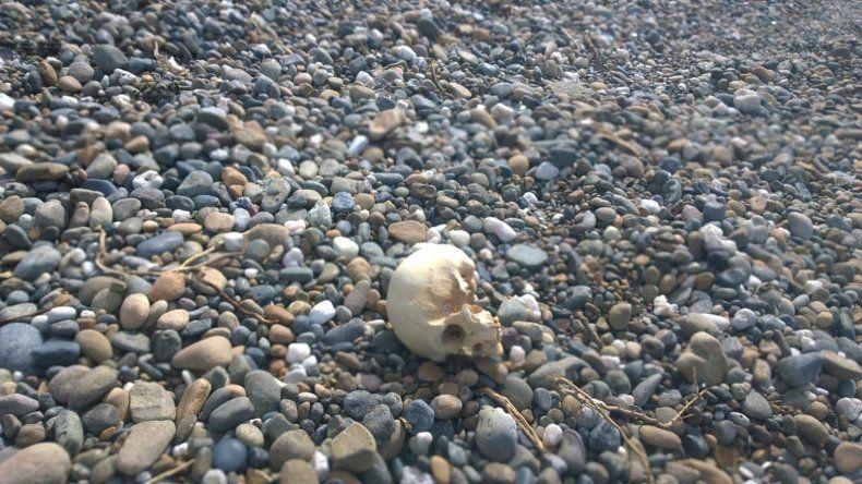 El cráneo hallado por el pescador en Barrancas Blancas.