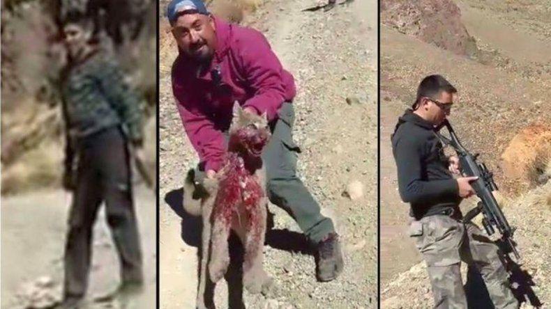 Torturaron a un puma y fueron identificados: uno de ellos es docente