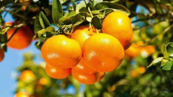 La mandarina tenía un agrotóxico prohibido