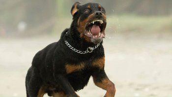 polemica: un juez ordeno sacrificar a un perro que mordio a tres personas