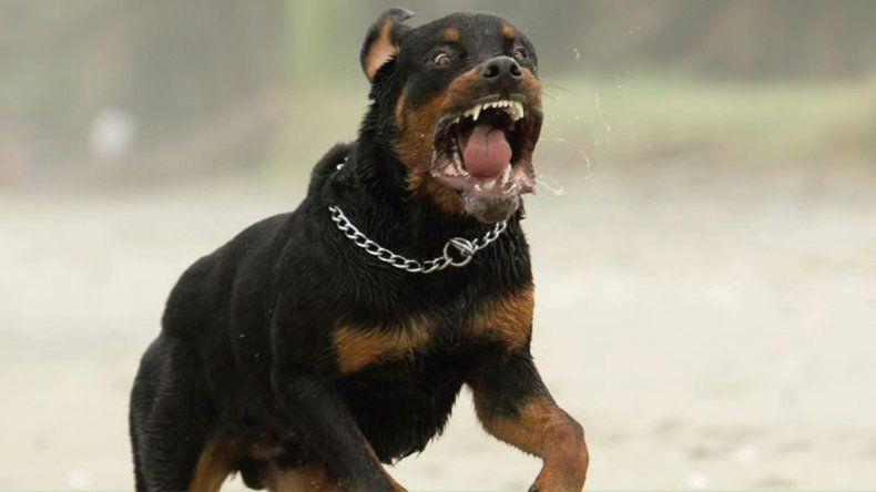 Polémica: un juez ordenó sacrificar a un perro que mordió a tres personas