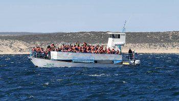Cada vez más turistas llegan a la Península para ver a las ballenas.