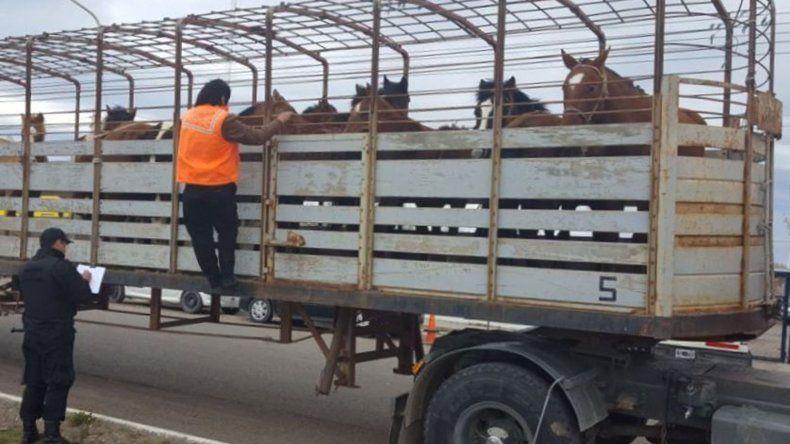 El camión con jaula y los caballos que eran transportados sin guía