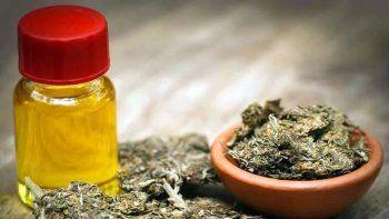 preocupacion por la reglamentacion parcial de la ley de cannabis medicinal