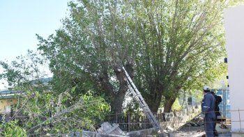 Por seguridad en la vía pública o por interferencias, la Municipalidad continúa con la poda de árboles en distintos sectores del ejido.