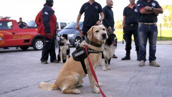 los canes que encontraron el cuerpo rastrillaron alrededor de 3 horas la zona