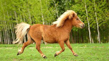 Trabajador de zoonosis habría perpetuado el abuso de un pony