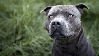 Usó a un pitbull para robarle a un adolescente que esperaba el colectivo