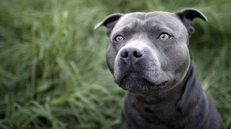 Un policía fue mordido durante una detención por uno de los dos perros que soltó un vecino