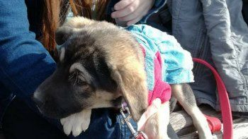 jornada de adopcion de mascotas en comodoro