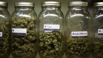 promueven proyecto para que el bolson sea capital del cannabis medicinal