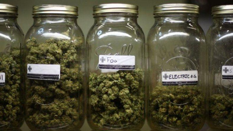 Promueven proyecto para que El Bolsón sea capital del cannabis medicinal