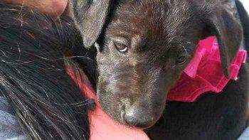 este sabado habra jornada de adopcion de mascotas