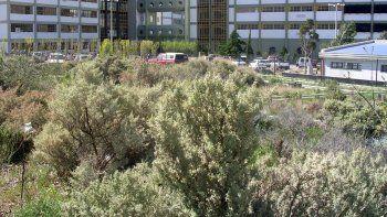 realizaran un taller de plantas nativas en la universidad