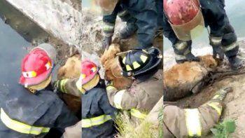 bomberos rescataron a un perro que cayo a una pileta