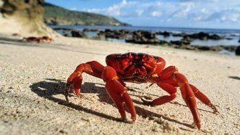 Los potenciales inversores hicieron conocer su interés en dos especies que no se explotan aún en Chubut, una de ellas el cangrejo.