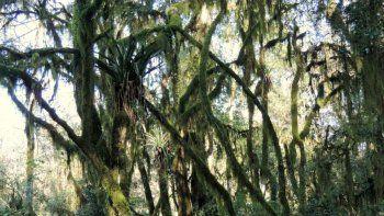 media sancion para la creacion de dos nuevos parques nacionales