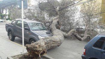 La caída de un árbol corta el tránsito en la calle Moreno