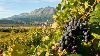 Apuntan a lograr financiamiento nacional para la producción vitivinícola en la Meseta