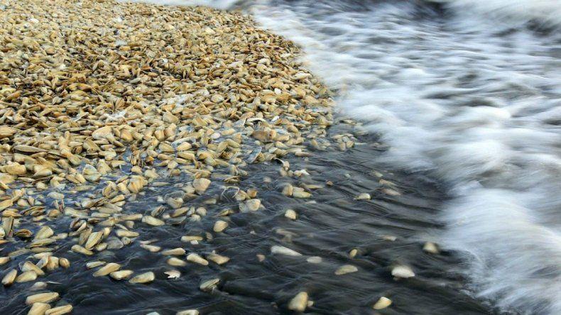 Se vedó la extracción de moluscos en Puerto Lobos