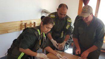 El Escuadrón 37 de Gendarmería Nacional incautó más de un millón de pesos en efectivo en Gobernador Costa.
