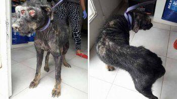 rescataron un perro sin ojos y necesitan ayuda para costear las curaciones
