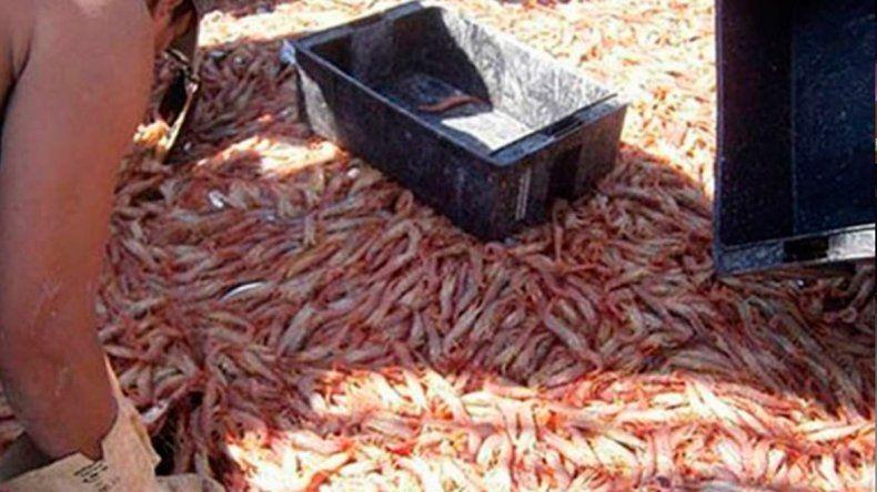El puerto de Comodoro aumentó un 39% el desembarco de pescados y mariscos