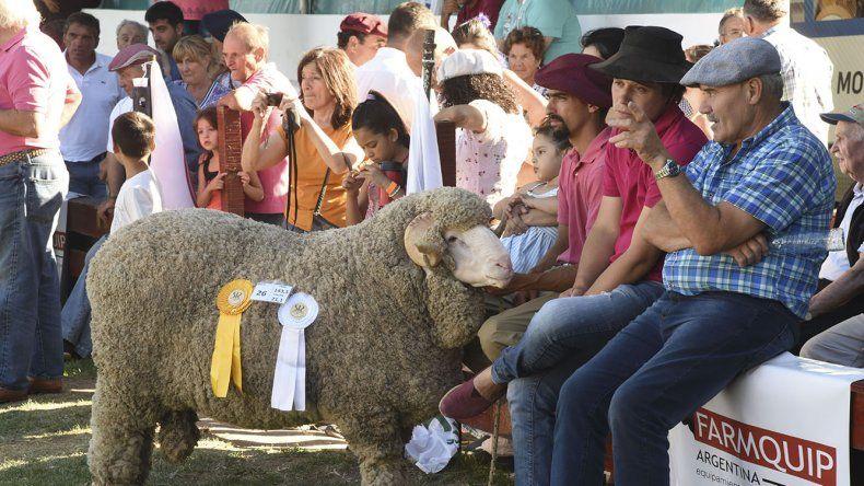 El Gran Campeón de la Sociedad Rural es un ejemplar de la Cabaña Leleque