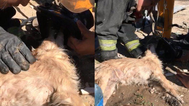 Bomberos combatieron un incendio y salvaron dos perros