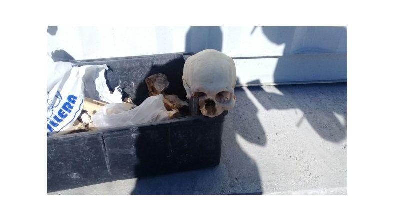 Hallaron restos óseos en la planta de tratamiento del Girsu